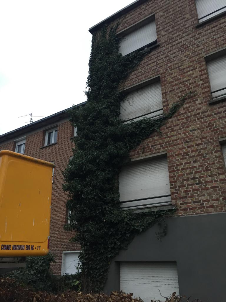 Avant la suppression du lierre sur un immeuble d'habitation